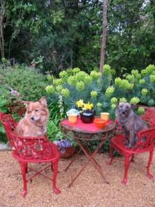 teadogs